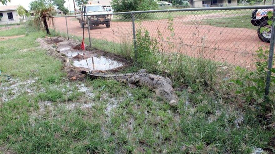 El 65 % de los anfibios y reptiles acusa los efectos del cambio climático