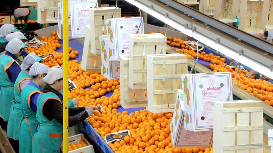 Trabajadoras de la Cooperativa Agroal