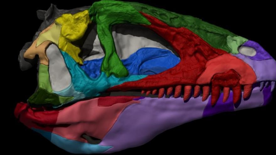 Cráneo de 'Pepito', el dinosaurio encontrado en el yacimiento de Las Hoyas, en Cuenca