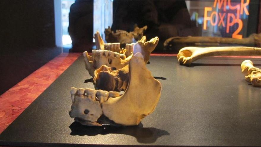 Uno de los restos óseos que se pueden encontrar en la muestra