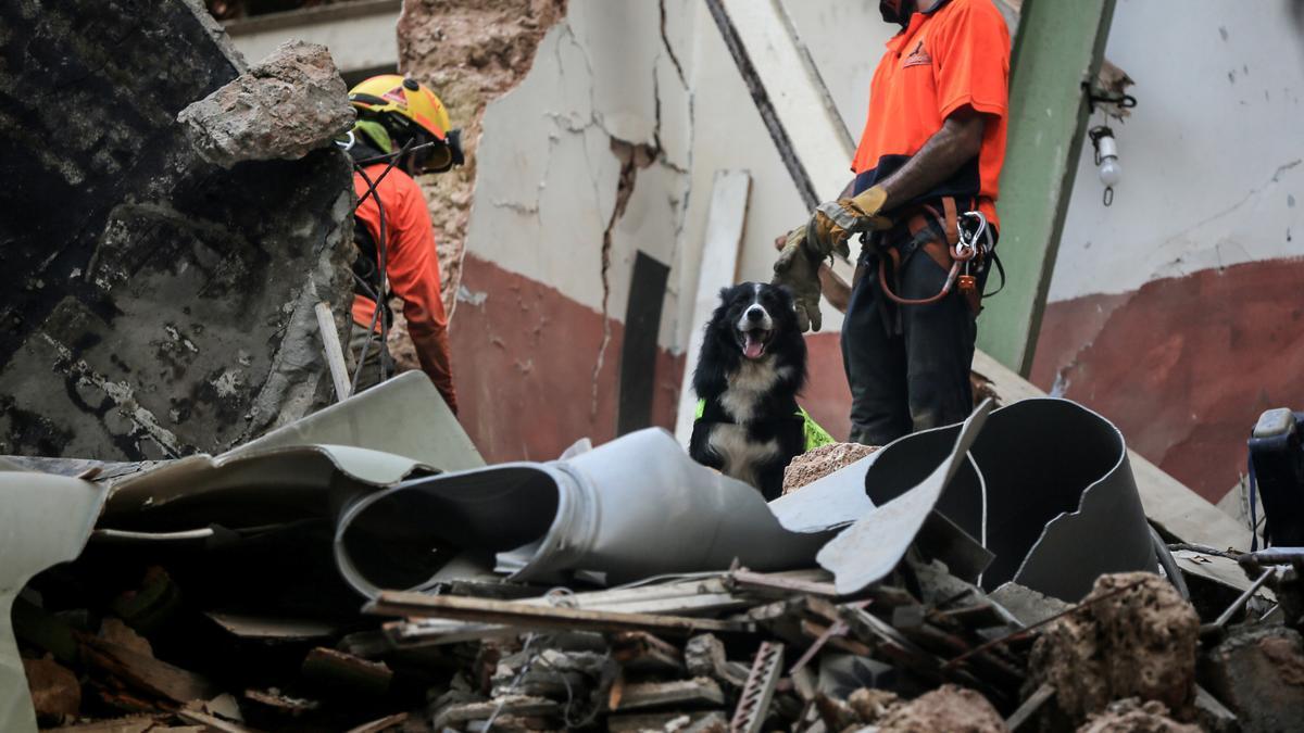 El perro y miembros del equipo de rescate durante los trabajos este jueves en el edificio derruido.