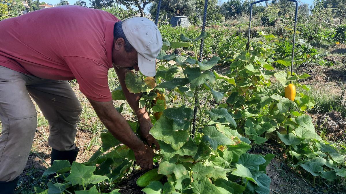 Un agricultor en un huerto