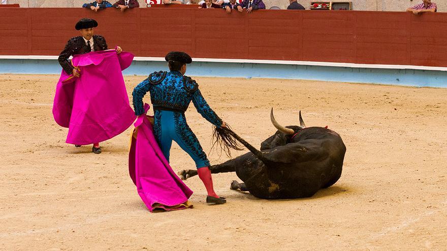 Nada más recibir la puya el toro se tira al suelo por el dolor y el miedo mientras los toreros se apresuran a levantarlo para proseguir el divertimento. Foto: colectivobritches.com