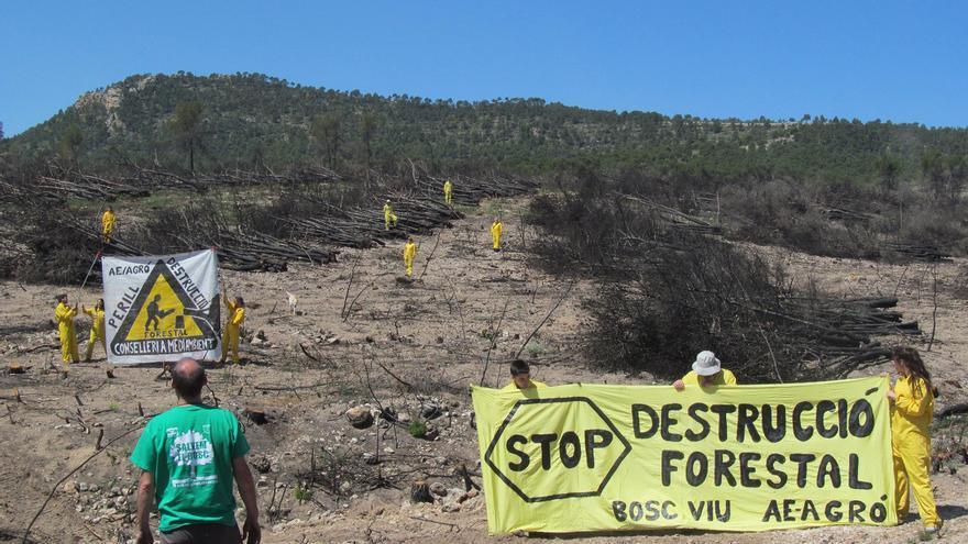 Activistas de Agró protestas contra la extracción de biomasa forestal