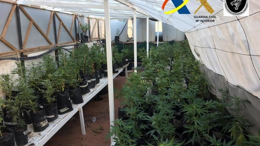 Plantación de marihuana descubierta en Gran Canaria