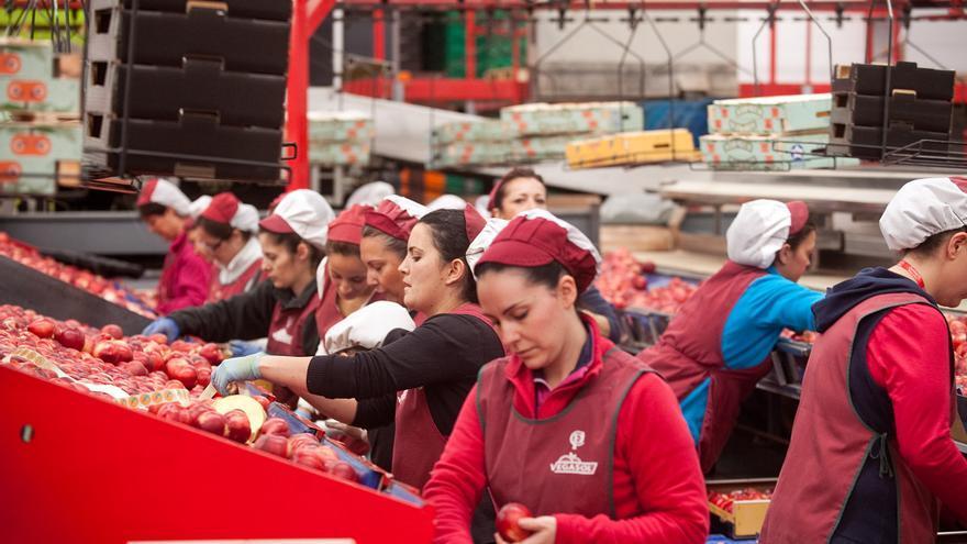 Trabajadoras de la cooperativa en plena campaña
