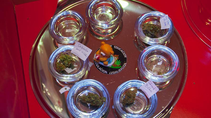 Muestras de marihuana en el club cannábico El Oso y el Cogollo, en Madrid.