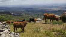 Un total de 1.445 ganaderos de la región reciben un nuevo pago de 9,4 millones de euros de ayudas europeas