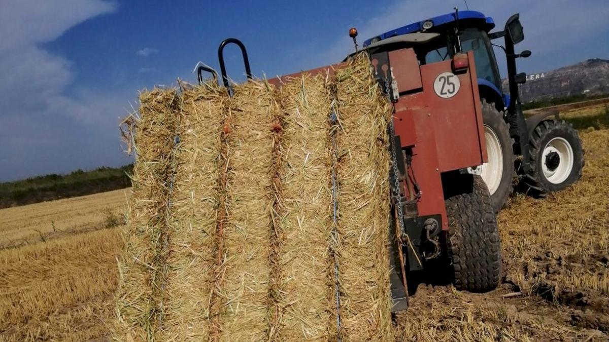 Un tractor transporta una bala de paja de arroz.