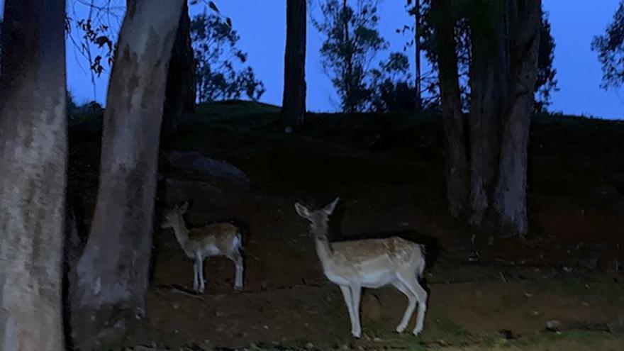 Recinto de fauna ibética del Parque de Cabárceno por la noche.