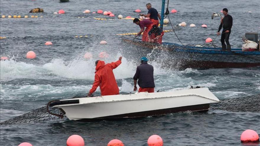 ICCAT rechaza incrementar la cuota de pesca del atún rojo, como pedía España