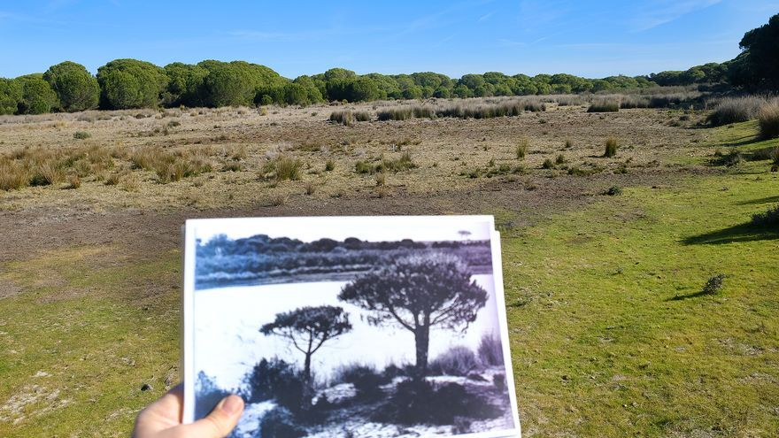 Charco del Toro. Era laguna temporal de larga duración o estacional. Laguna seca desde 2004