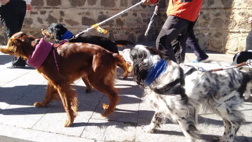 Manifestación contra la caza con galgos en Toledo