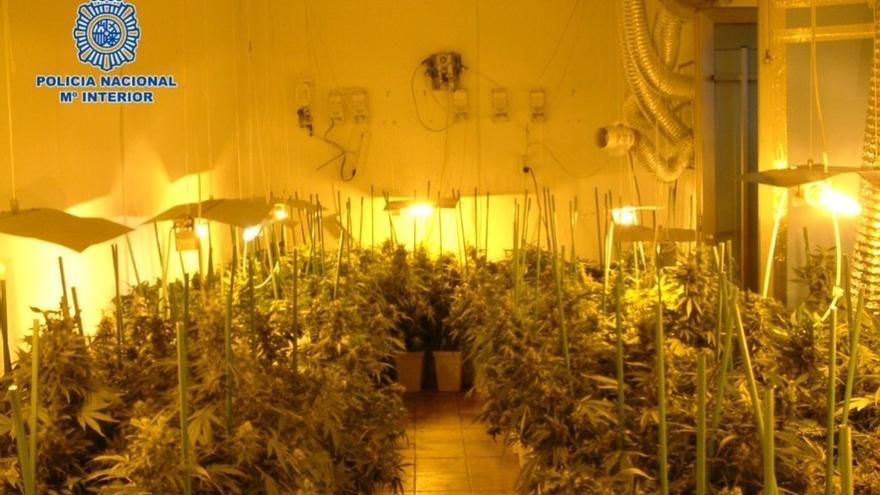Tres detenidos por tener plantaciones de marihuana en tres viviendas de don benito badajoz - Plantaciones de marihuana interior ...