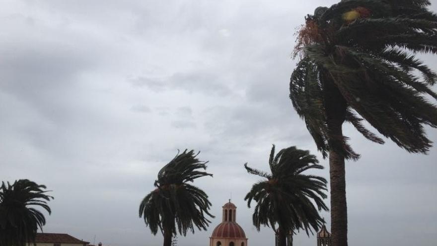 El viento menea las palmeras en La Orotava