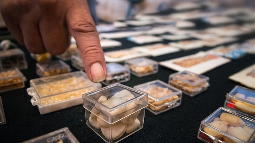 El maíz transgénico no ha resultado infalible contra las plagas. Foto: Flickr de Eneas