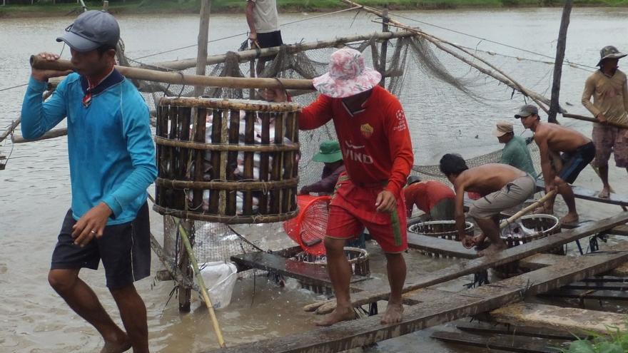 Cría de panga en Vietnam / WWF S. Gisch-Boie.