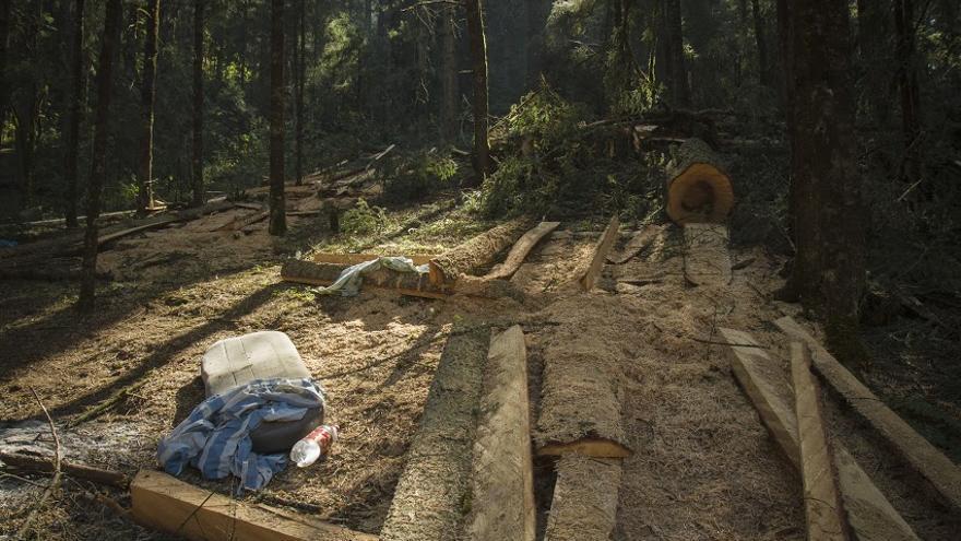La zona ha sido identificada con una de las 15 regiones críticas en México por tala ilegal / Imagen: Centro Prodh-Greenpeace