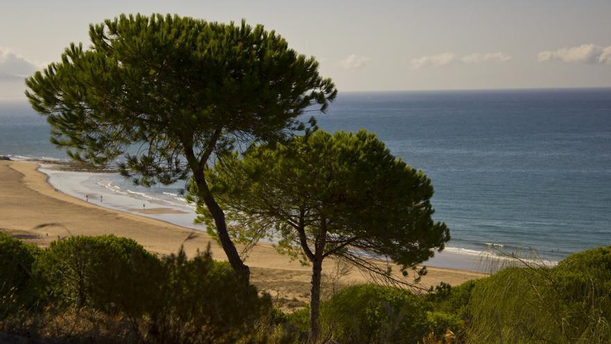 Playa de la Yerbabuena, una de las m{as bonitas de Barbate. Tony Fiero