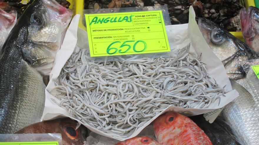 Cantabria regula la pesca de la angula y abre el plazo de solicitudes de la actual campaña
