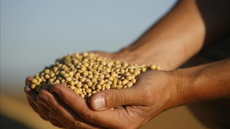 La soja, cultivo estrella de Argentina, pregona malas noticias para el Gobierno