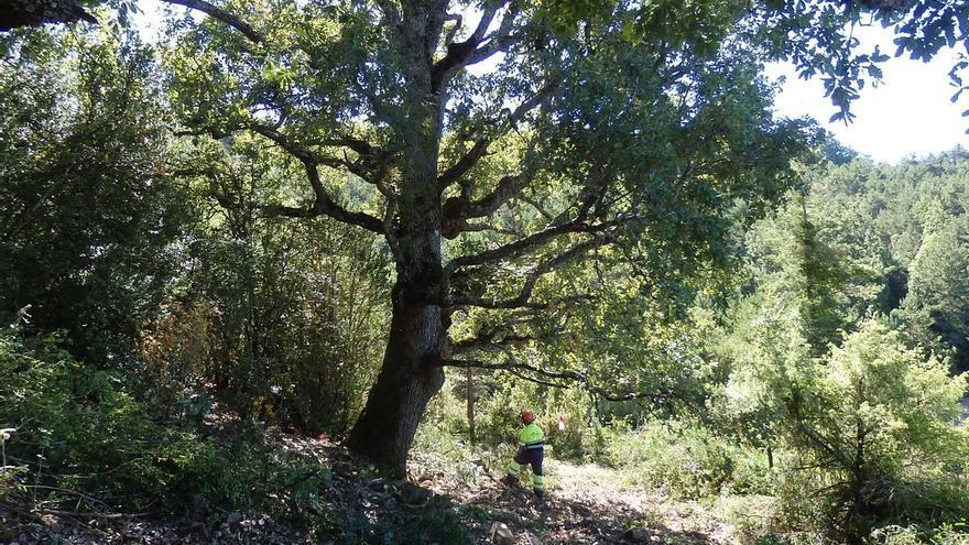 Finalizan las labores de recuperación de pastizales en el espacio protegido Sierra de San Miguel (Garde y Burgui)