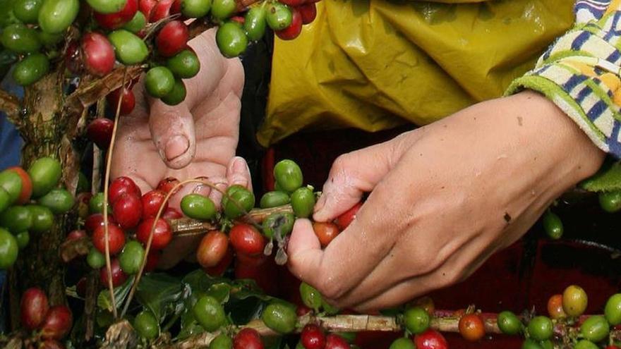 El BCIE y Taiwán destinan 3,5 millones de dólares a los caficultores de A. Central