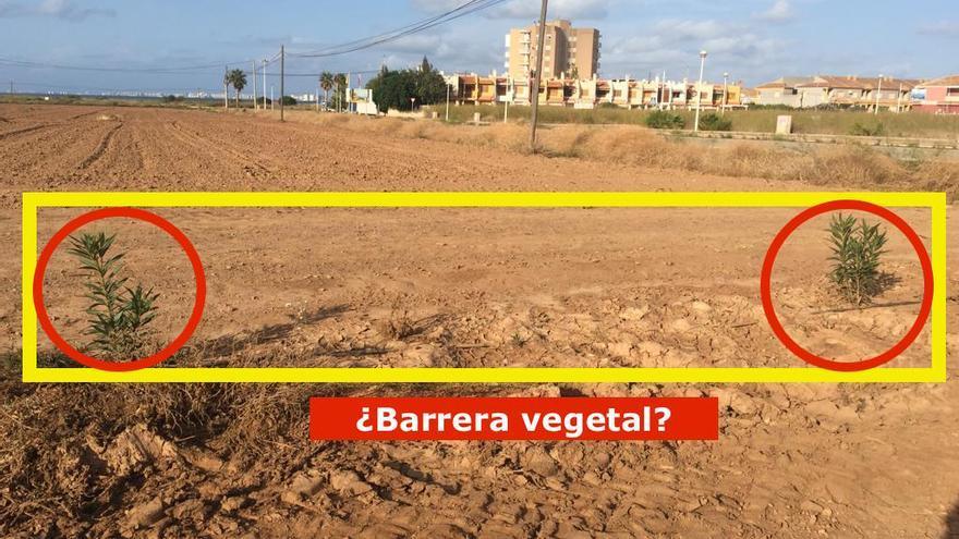 Especie de barrera vegetal/ Pacto por el Mar Menor