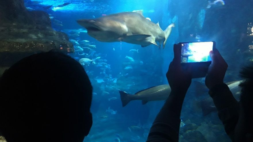 Un total de 16.272 personas han visitado el Aquarium donostiarra en los días festivos de Semana Santa