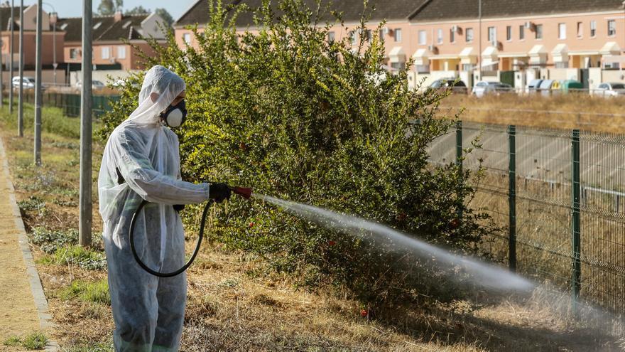 Habrá fumigación masiva para acabar con el mosquito transmisor del virus del Nilo