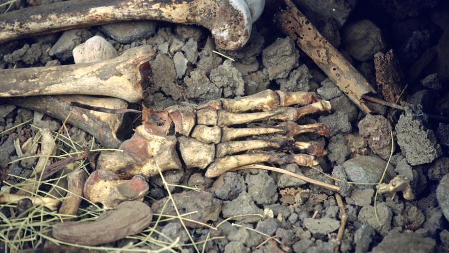 Restos humanos en una cueva funeraria del barranco de Briestas, en Garafía. Foto: JORGE PAIS