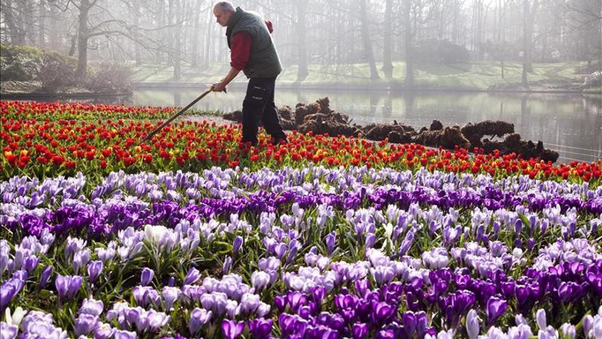 "Las flores del ""Keukenhof"" sobreviven a la crisis económica"
