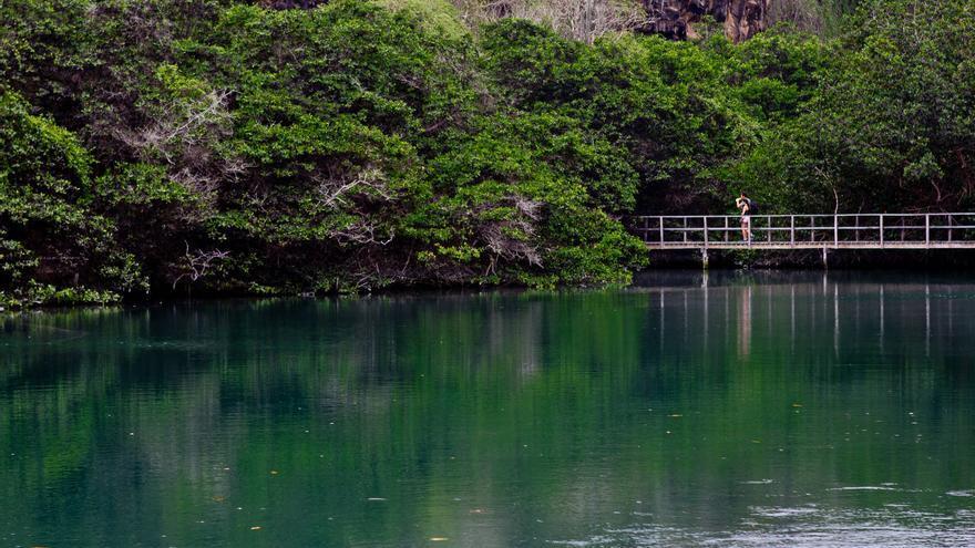 Laguna de Las Ninfas, en Puerto Ayora. Uno de los mejores manglares de Santa Cruz. VA