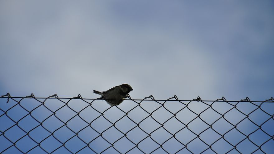 On the fence. Imagen de Frayle