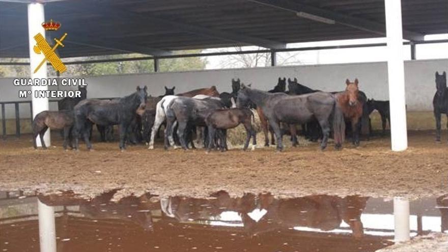 La Guardia Civil investiga al responsable de una explotación equina de Caudete (Albacete) por maltrato animal