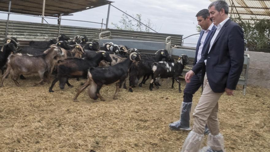 Imagen de la parte de la explotación que se dedica al manejo de ganado caprino