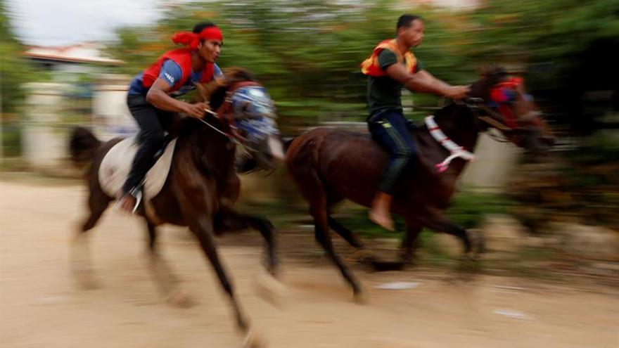 Miles de personas animan la tradicional carrera de búfalos de Bamboal Krobei