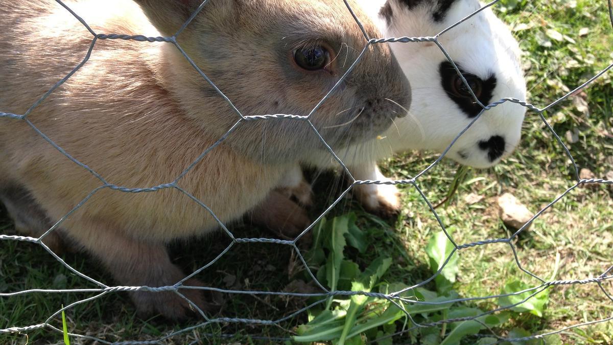 Granja de conejos