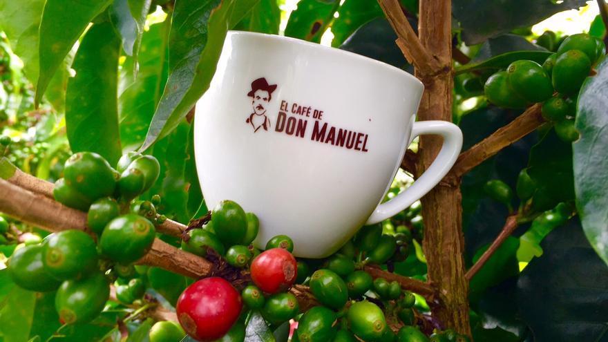 Una taza de la cafetería Don Manuel en una planta de café.