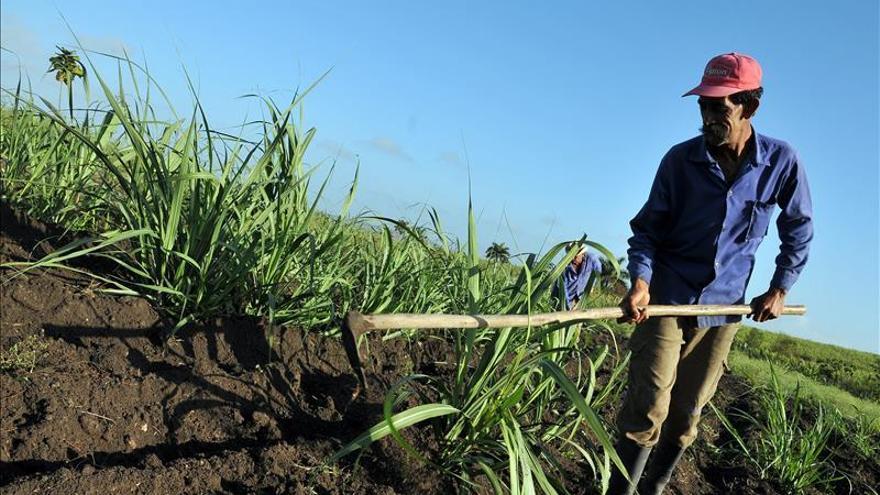 Venezuela prevé aumentar en un 18 por ciento su producción de alimentos en 2015
