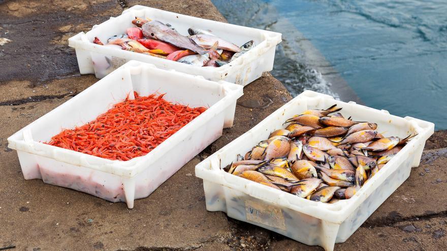 Productos fresco de la Pescadería El Muellito.