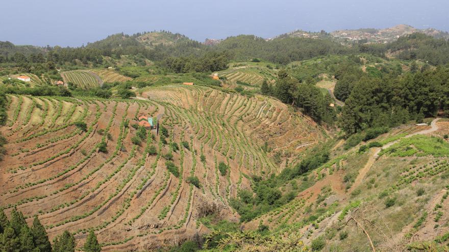 En la imagen, zona de monte de Puntagorda.