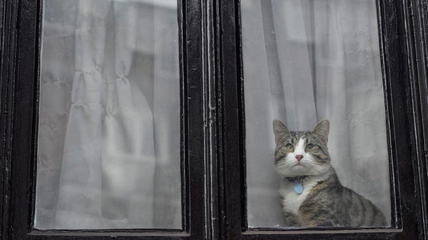Assange es interrogado en la embajada ecuatoriana en Londres
