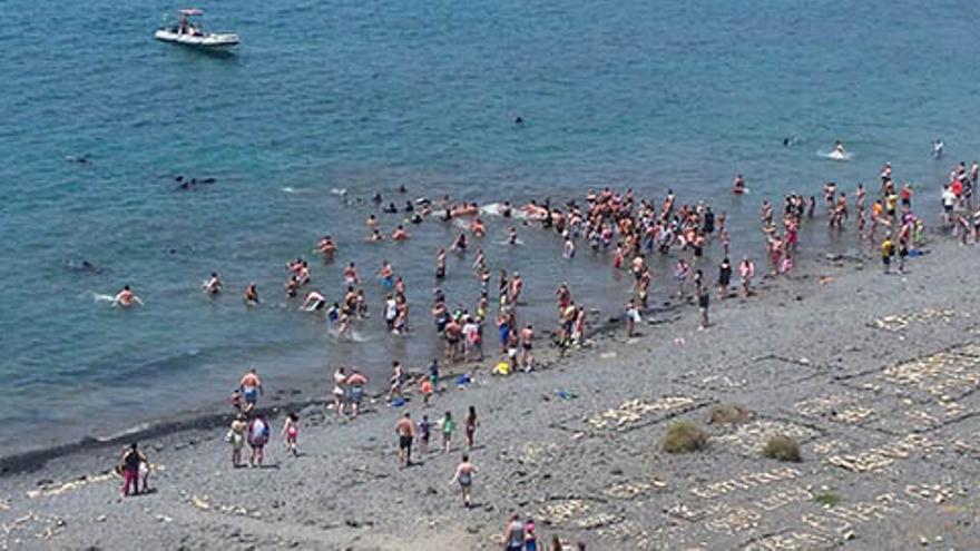 Cetáceos en la costa de Lanzarote