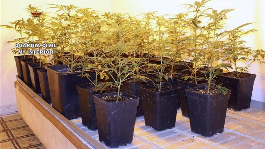 La Policía Nacional localiza 1.735 plantas de marihuana en Madrid