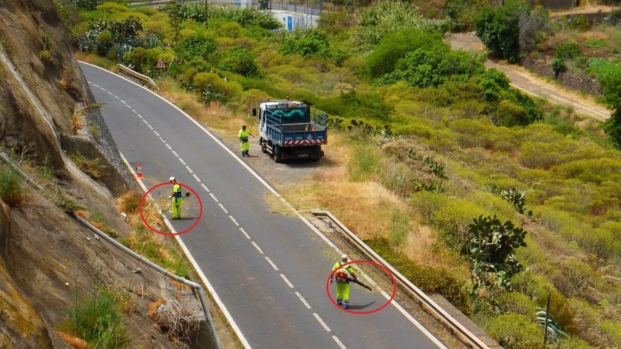 Operarios de Carreteras limpian las cunetas de rabo de gato de forma incorrecta, el 9 de mayo pasado