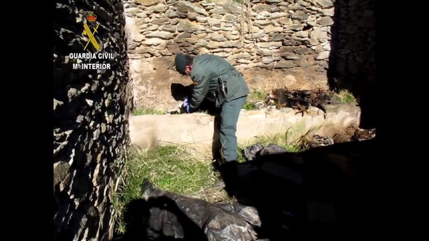 Detenido por la muerte de ocho perros en un cortijo en ruinas de la Alpujarra