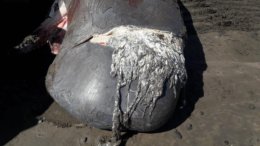 Detalle de la lesión sufrida por una embarcación rápida, según los primeros análisis técnicos