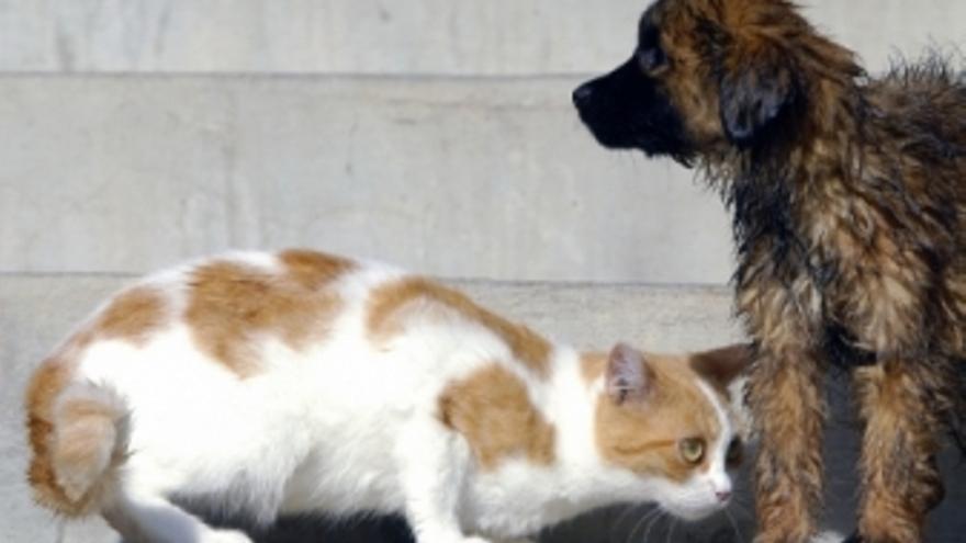 Gato y Perro. (ACFI PRESS)