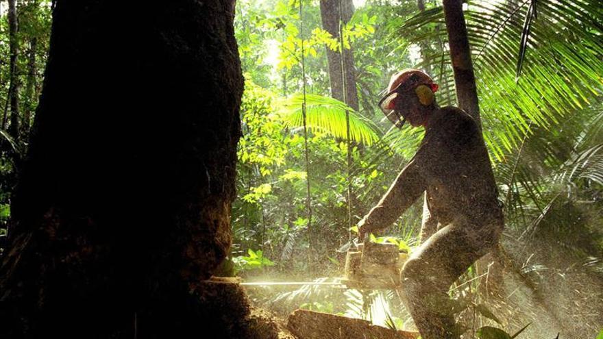 La deforestación arrasó 120.933 hectáreas de bosques en Colombia en 2013